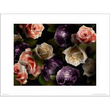 Reprodukce Roses Dark