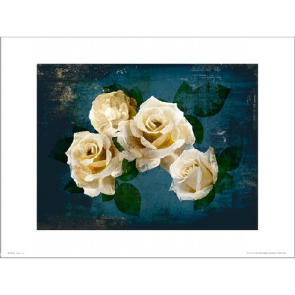Reprodukce Roses Midnight