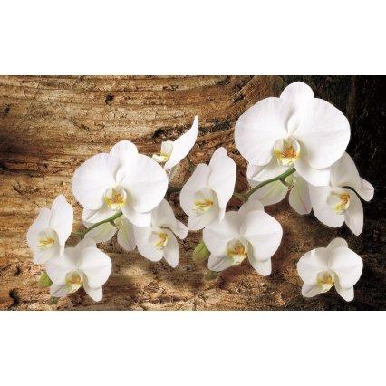 Fototapety Bílá orchidej 3
