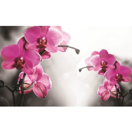 Fototapeta Orchid in grey background