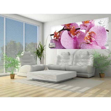 Fototapeta panoramatická vliesová Orchid
