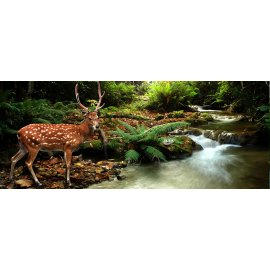 Fototapeta panoramatická vliesová Jelen