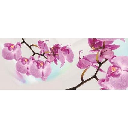 Fototapeta panoramatická vliesová Orchidej