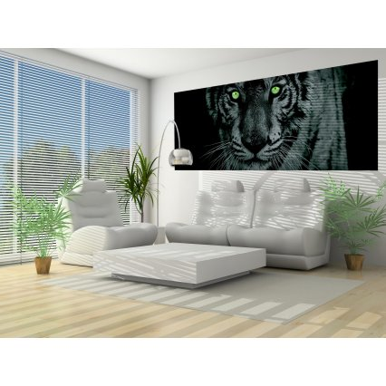 Fototapeta panoramatická vliesová Tigers