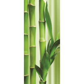 Fototapeta na dveře Bambus