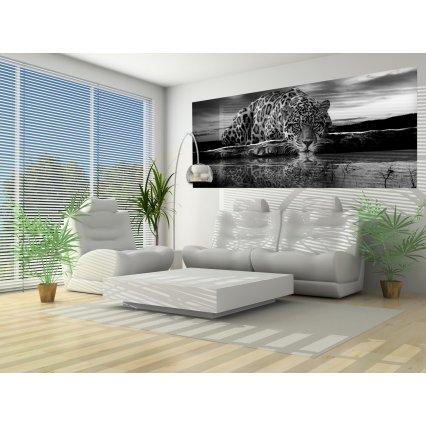 Fototapeta panoramatická vliesová Jaguar