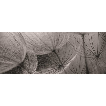 Fototapeta panoramatická vliesová Grey interior of dandelion