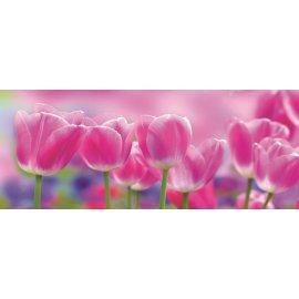Fototapeta panoramatická vliesová Meadow of Pink Tulips