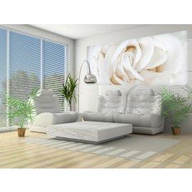 Fototapeta panoramatická vliesová Bílá růže
