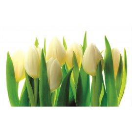 Fototapeta Bílé tulipány